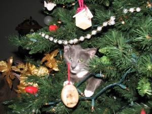 Socks in Christmas Tree