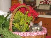 Felix in a basket