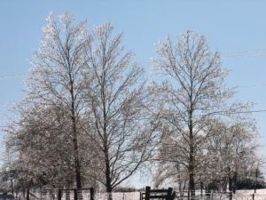 snowey ice storm